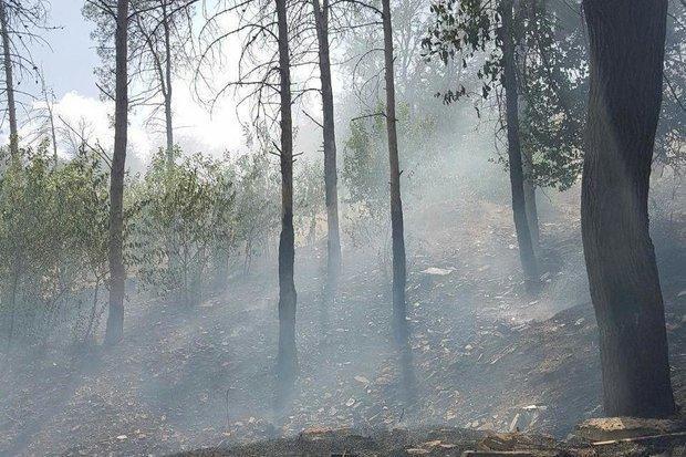 2 گزارش آتش سوزی در جنگل های ایلام، یکی از آتش سوزی ها مهار شد