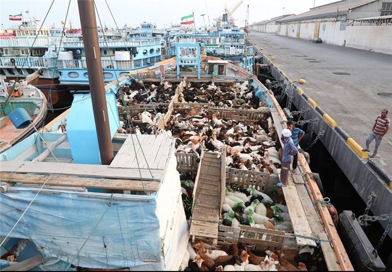 16 هزار راس دام زنده به کشور عمان صادر شد