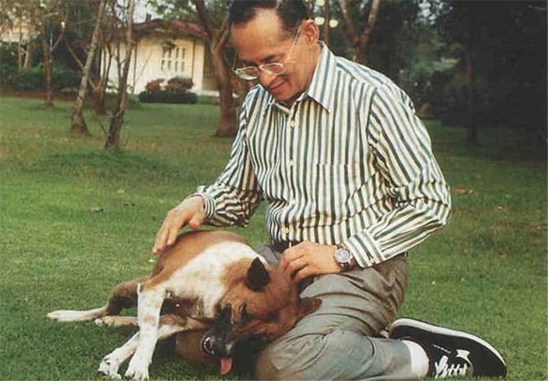37 سال زندان برای توهین به سگ پادشاه تایلند
