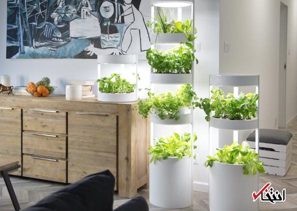 پرورش 76 نوع گیاه در باغچه هوشمند