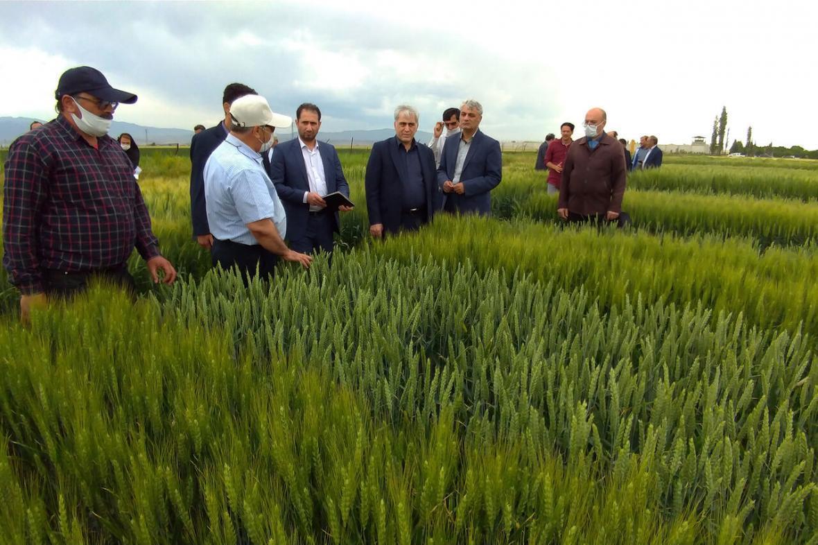 خبرنگاران معاون وزیر جهاد کشاورزی: سال جاری 6 میلیارد دلار محصول و نهاده کشاورزی وارد می گردد