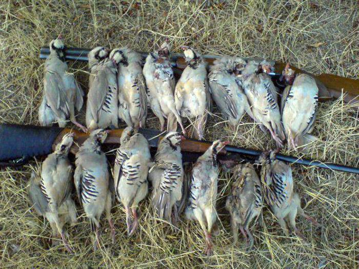 دستگیری دو شکارچی متخلف ، کشف لاشه 168 قطعه پرنده وحشی چنگر در فریدونکنار
