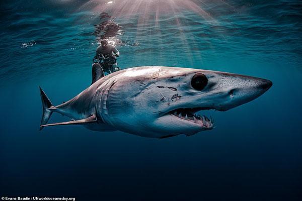 تصاویر برگزیده مسابقه روز جهانی اقیانوس (گزارش تصویری)